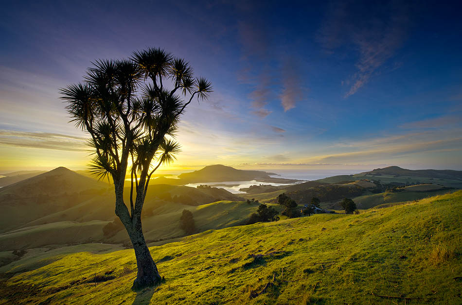 Photography for beginners one day course run in dunedin for Landscaping courses nz